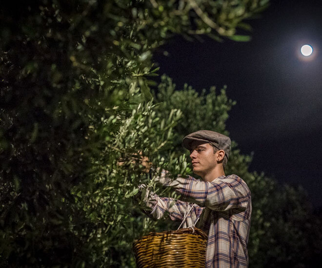 night_harvest_olio_centonze-min